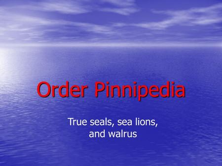 Order Pinnipedia True seals, sea lions, and walrus.