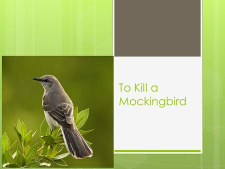 To Kill a Mockingbird. Major Characters  Scout (Jean Louise Finch) Narrator; 6; Tomboy  Jem- Jeremy; 10 year old protective brother  Atticus- Jem and.