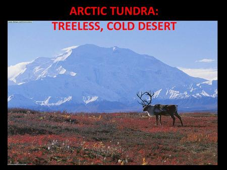 ARCTIC TUNDRA: TREELESS, COLD DESERT. ARCTIC TUNDRA: VERY COLD, LONG WINTERS.