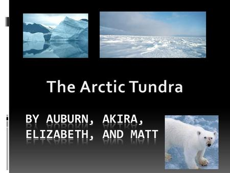 The Tundra's plants to not have colorful leaves. They are mainly aquatic. They do not like the cold wind chills, in fact, they grow under the wind-chill.