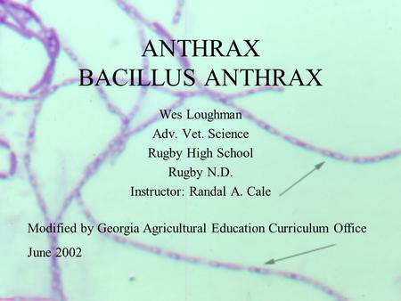 ANTHRAX BACILLUS ANTHRAX Wes Loughman Adv. Vet. Science Rugby High School Rugby N.D. Instructor: Randal A. Cale Modified by Georgia Agricultural Education.