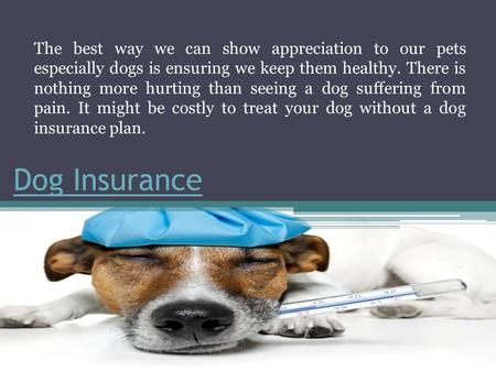 Dog Insurance The best way we can show appreciation to our pets especially dogs is ensuring we keep them healthy. There is nothing more hurting than seeing.