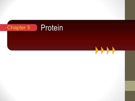 "Protein Chapter 5. Introduction Proteins are ""of prime importance"" Versatile roles: needed for muscle contraction, blood clotting, vision, fighting infections,"