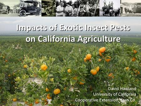 Impacts of Exotic Insect Pests on California Agriculture David Haviland University of California Cooperative Extension, Kern Co.