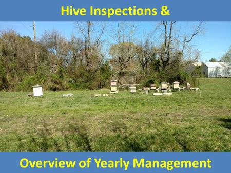 Hive Inspections & Overview of Yearly Management.