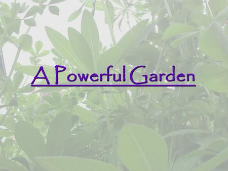 A Powerful Garden. How can a garden positively impact the environment?