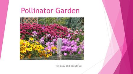 Pollinator Garden It's easy and beautiful!. What is a pollinator garden?  A pollinator garden is designed to provide nectar and pollen sources to pollinators.