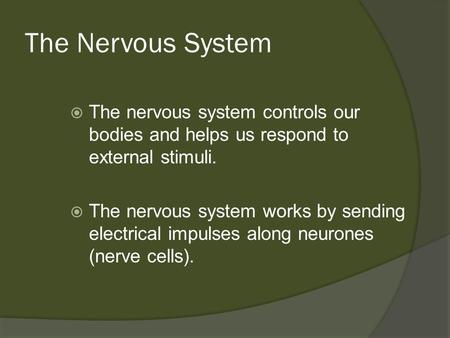 The Nervous System  The nervous system controls our bodies and helps us respond to external stimuli.  The nervous system works by sending electrical.