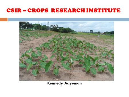 CSIR – CROPS RESEARCH INSTITUTE Kennedy Agyeman. Effect of Fertilizer Application and Plant Density on Growth and Yield of Taro.