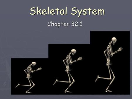 Skeletal System Chapter 32.1. Exo vs Endo External Internal.