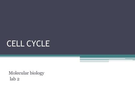CELL CYCLE Molecular biology lab 2. Cell cycle  The cell cycle, or cell-division cycle, is the series of events that takes place in a cell leading to.