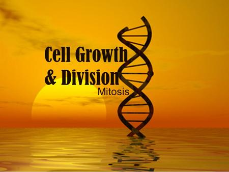 Cell Growth & Division Mitosis. Why do Cells Reproduce? Growth of an organism Replacement of old or damaged cells.