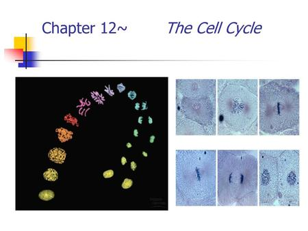 Chapter 12~ The Cell Cycle 2007-2008 Biology is the only subject in which multiplication is the same thing as division…