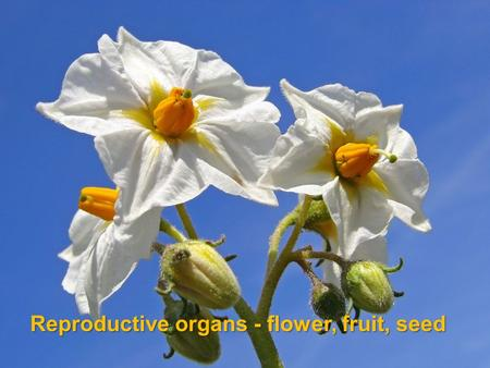 Reproductive organs - flower, fruit, seed
