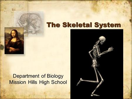 Intro to Skeletal System. MAIN FUNCTION OF THE SKELETAL ...