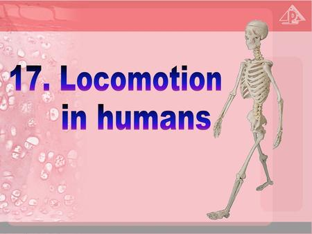 17.1 Why do animals need a skeleton? 17.2 The human skeleton 17.3 General plan and functions of the human skeleton 17.4 Joints 17.5 Muscles 17.6 Locomotion.