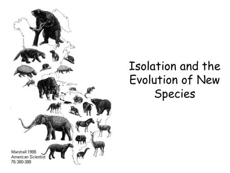 Isolation and the Evolution of New Species. Learning Objectives 1.To know how new species arise. 1.To understand how a population becomes isolated. 1.To.