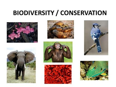 BIODIVERSITY / CONSERVATION. Biodiversity Variety of life on planet Earth Includes the genetic, species, and ecosystem diversity About 1.7 – 2 million.