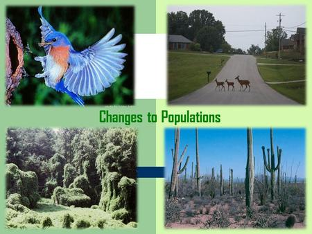 Changes to Populations. 4 factors that effect the size of a population Increase Population – 1) Birth – 2) Immigration (entering a population) Decrease.