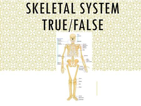 SKELETAL SYSTEM TRUE/FALSE. 10. Bones that surround organs, like the heart, function primarily in support. 12. Bones surround organs like the brain/heart.