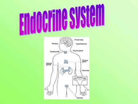 Aim: What are the main parts and functions of the endocrine system? I. Endocrine System A. Endocrine (ductless) gland - is a group of cells that produces.