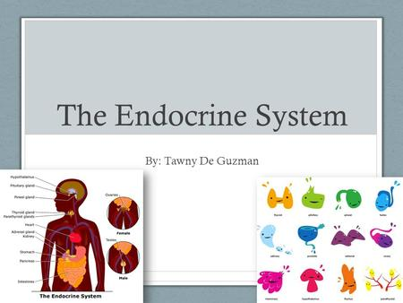 The Endocrine System By: Tawny De Guzman. What is it? Endocrine system: organ system involved in the coordination of body activities; uses hormones as.