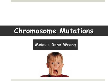 Chromosome Mutations. What's SUPPOSED to happen:  Crossing over (Homologous chromosomes exchange genes)  2 divisions result in genetically unique cells.