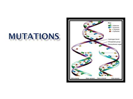 MS-LS 3-1. I will explain how mutations can effect organisms in positive, negative, and neutral ways.