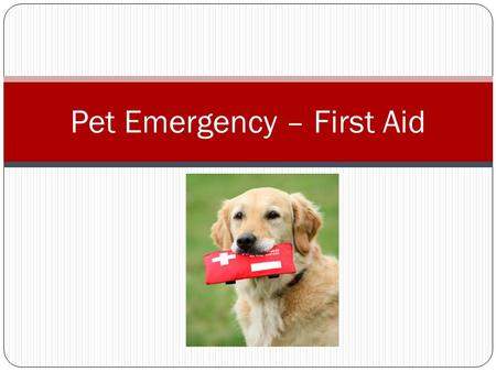 Pet Emergency – First Aid. Approaching an ill or injured animal Remain calm and be reassuring Observe warning signs.