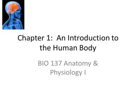 Chapter 1: An Introduction to the Human Body BIO 137 Anatomy & Physiology I.