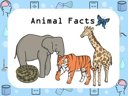 Animal Facts. The tiger is the biggest Species in the cat family. Tigers can reach 3.3 metres in length. Wild tigers live in Asia in thick forests or.