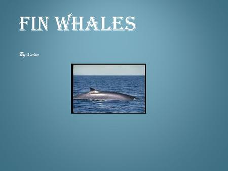 FIN WHALES By K aine. Fin whales weight can be up to 130 tons. They can be 90 feet long. FIN WHALES WEIGHT AND LENGTH.
