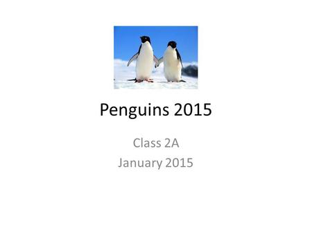 Penguins 2015 Class 2A January 2015. Rockhopper Penguin by Aidan The Rockhopper penguin eats fish, squid, and krill. It lives around Antarctica. Their.