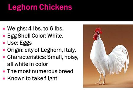  Weighs: 4 lbs. to 6 lbs.  Egg Shell Color: White.  Use: Eggs  Origin: city of Leghorn, Italy.  Characteristics: Small, noisy, all white in color.