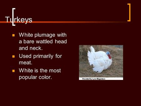 Turkeys White plumage with a bare wattled head and neck. Used primarily for meat. White is the most popular color.