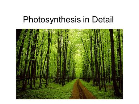 Photosynthesis in Detail. Photosynthesis: An Overview Autotrophs are the producers of the biosphere. Most use photosynthesis to produce organic compounds.