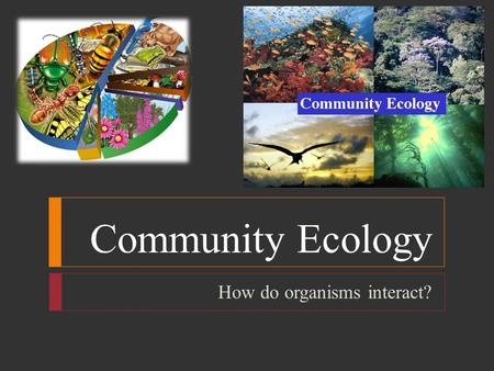 Community Ecology How do organisms interact?. Community Ecology  Ecologists use 3 characteristics to describe a community: 1. Physical Appearance: size,