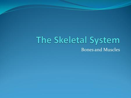Bones and Muscles. How the Skeletal System Works There are 206 bones in the body The smallest bones in the body are in the inner ear The largest bone.