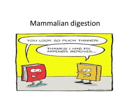Mammalian digestion. Teeth Teeth provide mechanical digestion by tearing food up into bits. See teeth powerpoint for differences in herbivore and carnivore.