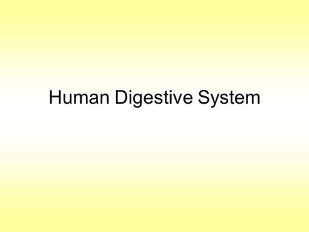 Human Digestive System. Image of the Digestive System An Introduction to the Human Digestive SystemAn Introduction to the Human Digestive System. The.