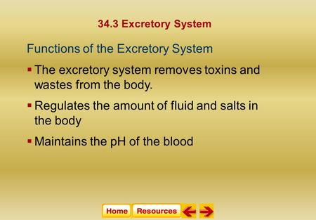 34.3 Excretory System Functions of the Excretory System  The excretory system removes toxins and wastes from the body.  Regulates the amount of fluid.