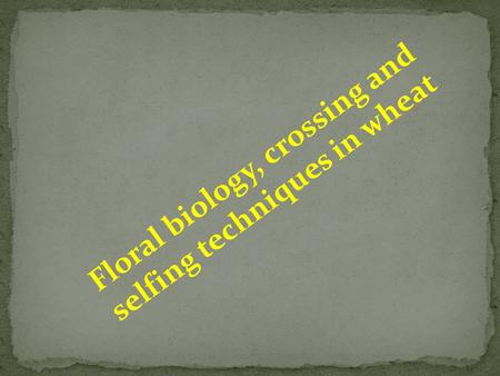 Floral biology, crossing and selfing techniques in wheat