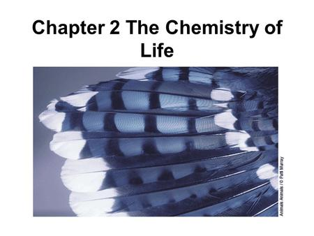 Chapter 2 The Chemistry of Life. Chemistry Vocabulary 1.Element 12. Chemical energy 2.Atom 13. Water 3.Organization 14. Polar 4.Electron 15. Non-polar.