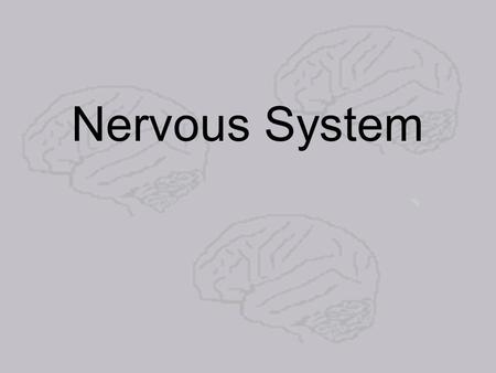 Nervous System. The nervous system is broken down into two major parts:
