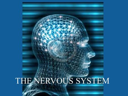 THE NERVOUS SYSTEM. Brain WHAT PARTS DO YOU KNOW THAT ARE IN THE NERVOUS SYSTEM? Spinal Cord Peripheral Nerves.