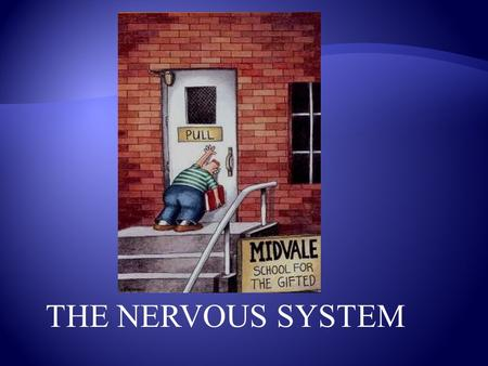 THE NERVOUS SYSTEM The nervous system also allows you to react to a stimulus. A stimulus is a change in the environment. Example: A hot stove Or… tripping.