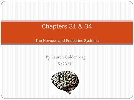 By Lauren Goldenberg 5/23/11 Chapters 31 & 34 The Nervous and Endocrine Systems.