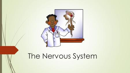 The Nervous System. What is the Nervous System?  The nervous system is the highway along which your brain sends and receives information about what is.