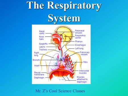The Respiratory System Mr. Z's Cool Science Classes.
