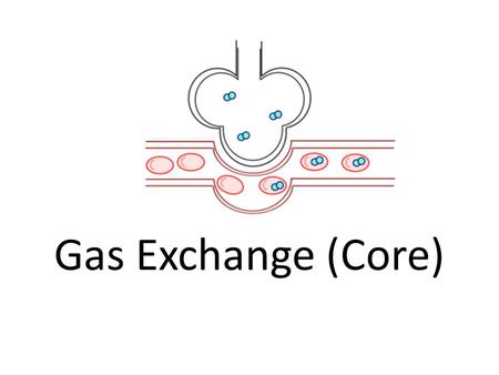 Gas Exchange (Core). Assessment StatementsObj. 6.4.1 Distinguish between ventilation, respiration and gas exchange. 2 6.4.2 Explain the need for a ventilation.